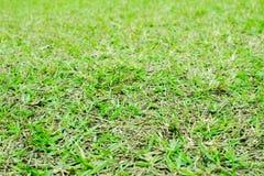 Piękne zielone łąki wokoło i drzewa fotografia royalty free