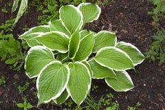 Piękne zielone dekoracyjne rośliny Obrazy Royalty Free