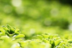 Piękne zielone rośliny obraz stock