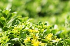 Piękne zielone rośliny obrazy stock