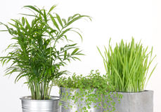 Piękne zielone rośliny w garnkach obraz royalty free