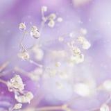 Pięknego abstrakta lekki i zamazany miękki tło z kwiatem Zdjęcia Royalty Free