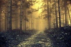Pięknego barwionego ranku mgłowy las Zdjęcie Royalty Free