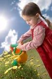 pięknego dziecka stokrotki rośliny podlewanie Zdjęcie Royalty Free
