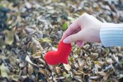 Pięknego kobieta chwyta czerwony serce dekorował w jej ręce Fotografia Stock