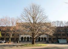 Pięknego kształta bezlistni trtrees w zimie przed budynkiem w Tokio uniwersytecie Obrazy Royalty Free