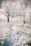 pięknego lasu krajobrazu drogowa śnieżna zima obraz royalty free