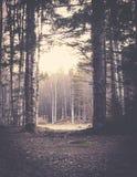 Pięknego lata sezonowa fotografia Fantastyczny naturalny lasowy przejście podczas lata Uroczy światła Zdjęcie Stock