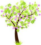 pięknego okwitnięcia kwiecista zieleń opuszczać drzewa Obraz Royalty Free