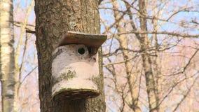 Pięknego ptaka gniazdować domowy pudełko robić od brzoza drzewnego bagażnika zbiory