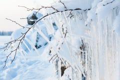 Pięknego sopla lodowa formacja na małym drzewie fotografia royalty free
