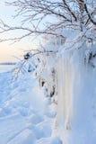 Pięknego sopla lodowa formacja na małym drzewie Zdjęcia Stock