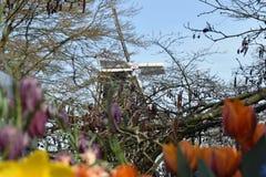 Pięknego węża fritillary Fritillaria meleagris kierowniczy kwitnienie w wiośnie w sławnym Holenderskim tulipanu parku Typowy hole obraz stock