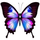 Pięknego wektoru odosobniony błękitny motyl Fotografia Stock