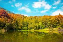 Pięknego widoku drzew sceny natury lasowy tło Obraz Stock