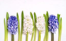 Pięknego wiosna kwiatu tła Błękitnej i Białej hiacyntu tła Odgórnego widoku Białej wiosny wakacje Wielkanocna karta Tęsk Fotografia Royalty Free
