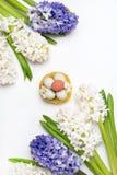 Pięknego wiosna kwiatu tła Błękitnej i Białej hiacyntu tła Odgórnego widoku wiosny wakacje Białej Wielkanocnej karty Pionowo jajk Obrazy Royalty Free