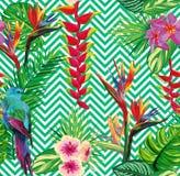 Pięknej bezszwowej tropikalnej dżungli kwiecisty deseniowy tło Obraz Royalty Free