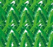 Pięknej bezszwowej tropikalnej dżungli kwiecisty deseniowy tło z różnymi bananowymi liśćmi Obraz Stock