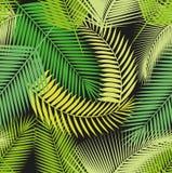 Pięknej bezszwowej tropikalnej dżungli kwiecisty deseniowy tło z różnymi palmowymi liśćmi Zdjęcia Stock