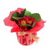 pięknej chlebowej serowej papki czerwona waza zawijająca zdjęcia royalty free
