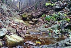Pięknej jesieni lasowa Lasowa wiosna z clearwater naturalny obrazy royalty free