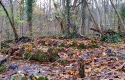 Pięknej jesieni lasowa Lasowa wiosna z clearwater naturalny fotografia stock
