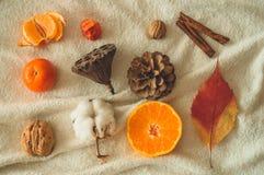Pięknej jesieni sezonowy tło Jesień asortymentu sosny rożka bawełna, mandarynka, orzech włoski, cynamon, liście, physilis granato zdjęcie royalty free