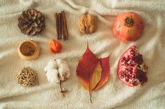 Pięknej jesieni sezonowy tło Jesień asortymentu sosny rożka bawełna, mandarynka, orzech włoski, cynamon, liście, physilis granato fotografia royalty free
