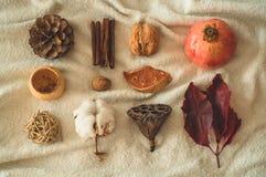 Pięknej jesieni sezonowy tło Jesień asortymentu sosny rożka bawełna, mandarynka, orzech włoski, cynamon, liście, physilis granato zdjęcia royalty free