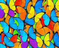 Pięknej mieszanki kolorowy motyli tło Kolorowy Mieszany Butte Zdjęcie Stock