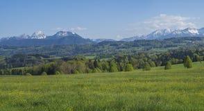 Pięknej panoramicznej wiosny góry wiejski krajobraz w Bawarskich Alps z kwitnącą łąką i śniegiem zakrywał górę fotografia royalty free