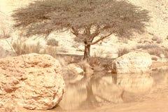 Pięknej pustynnej oazy wiosny jeziorny drzewny widok zdjęcia stock