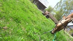 Pięknej szarej koń uszczypniętej wiosny zielona trawa 4K zbiory