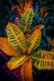 Pięknej tęczy kolorowi liście i kwiaty podczas jesieni w a zdjęcie stock