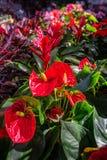 Pięknej tęczy kolorowi liście i kwiaty podczas jesieni w a obrazy royalty free