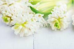 Pięknej wiosna kwiatu tła hiacyntów tła Odgórnego widoku Białej Białej wiosny wakacje karty kopii Wielkanocna przestrzeń Zdjęcia Royalty Free