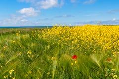Pięknej wiosny wiejski krajobraz z gwałta polem fotografia royalty free