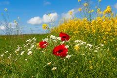 Pięknej wiosny wiejski krajobraz z gwałta polem zdjęcie stock