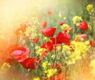 Piękni łąka kwiaty zaświecający światłem słonecznym Zdjęcia Royalty Free