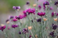 Piękni śliczni kwiaty drogą Fotografia Royalty Free