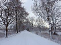 Piękni śnieżni drzewa i sposób, Lithuania zdjęcia stock