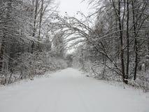 Piękni śnieżni drzewa i sposób, Lithuania zdjęcia royalty free