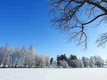 Piękni śnieżni drzewa w polu, Lithuania Zdjęcia Stock
