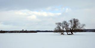 Piękni śnieżni drzewa w polu, Lithuania Obraz Royalty Free