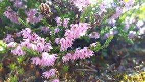 Piękni światła i kwiaty Obrazy Stock