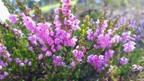 Piękni światła i kwiaty Fotografia Stock