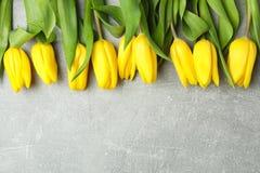 Piękni świezi żółci tulipany na szarym tle obrazy stock