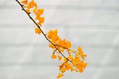 Piękni żółci liście w jesieni obraz royalty free