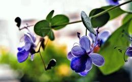 Piękni błękitni przejrzyści kolory zdjęcie stock
